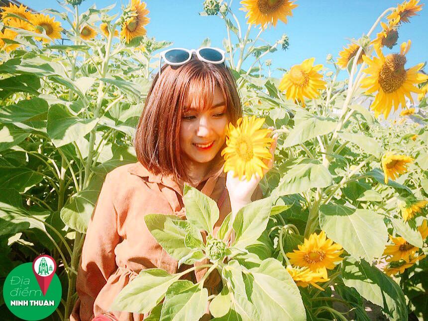 Sunflower homestay