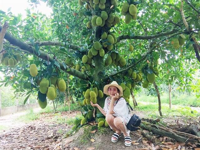 Top 5 vườn trái cây ăn chơi tại Sông Pha dịp hè